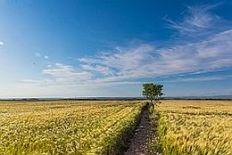 pxwheat