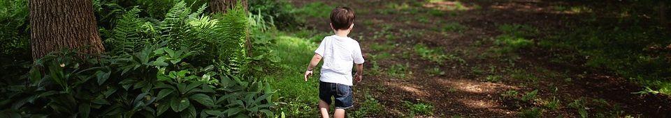 boy ferns
